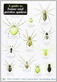 Bee Identification Chart Uk A Guide To House And Garden Spiders Amazon Co Uk Lawrence