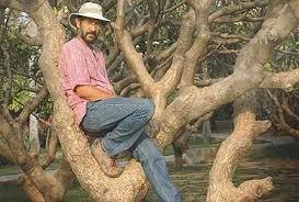 The Tree Sanctuary