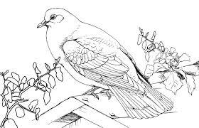 Small Picture Pigeon Coloring Pages Coloring Page