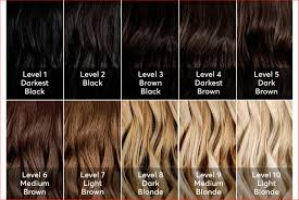 Medium Brown Hair Colour Chart Top Level 6 Hair Color Chart Picture Of Hair Color Ideas