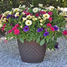 Pay particular attention to foliage color, texture, and habit first, and then select plants for their flower color, size, form, and bloom time second. 11 Easy Colorful Container Garden Ideas Costa Farms