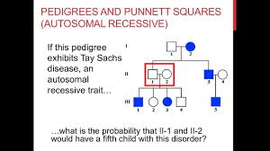 Pedigree Chart Maker Circles And Squares Solving Pedigree Genetics Problems
