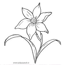 Disegni Da Colorare Categoria Fiori E Piante Immagine Narciso