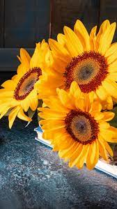 Sunflowers, twine, scissors 1242x2688 ...