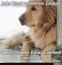 Jeder Hund Verdient Ein Zuhause Lustige Bilder Sprüche Witze