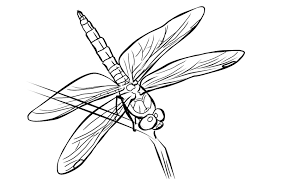 Free Dragonfly Coloring Page 8