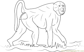 Small Picture Walking Baboon Coloring Page Free Baboon Coloring Pages