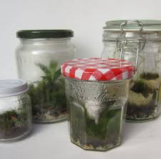 picture of the basics of closed jar terrariums