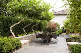 Meerstammige Bomen Voor Kleine Tuin