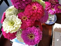 Small Picture 96 best Zinnias images on Pinterest Zinnias Flower gardening