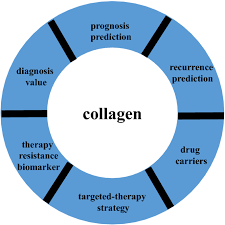 The role of <b>collagen</b> in cancer: from bench to bedside   Journal of ...