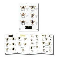 Bee Identification Chart Uk Guide To Bees Of Britain Laminated Identification Chart