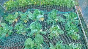 cultivate a thriving garden the last thing you want is critters to invade and eat everything you planted this simple netting and masonry ladders setup