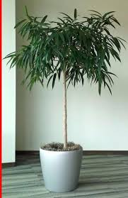 plants for office cubicle. Must See Office Design Best Indoor Plants Cubicle Nyc For