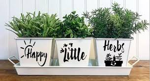 3 white pots with the words happy little herbs printed on them