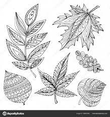 Collectie Van Decoratieve Herfst Bladeren Van Verschillende Bomen