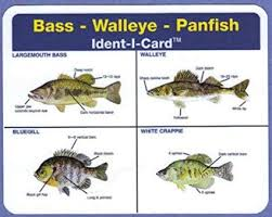 Freshwater Fish Identification Chart Amazon Com Ident I Cards Bass Walleye Panfish