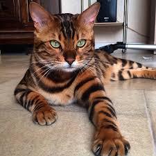 random internet cat pic