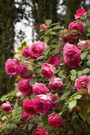 Small Picture 1466 best Rose garden designs images on Pinterest Flowers