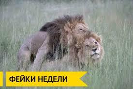 У львов геев обнаружена докторская диссертация и визитка Яроша Ридус in article d56a3a5a74