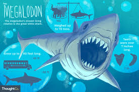 Shark Size Comparison Chart 10 Interesting Facts About Megalodon