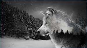 Wolf 10K Wallpapers For Your Desktop Or ...