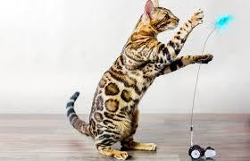 petronics mousr interactive robot cat toy