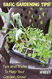 beginner gardening. Are You A Beginner Gardener, Starting Garden, Want To Know How Grow Gardening