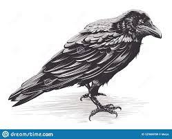 Vector Crow Art On White Stock Vector Illustration Of Tattoo