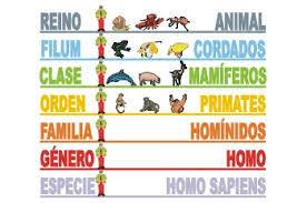 Resultado de imagen de taxonomia