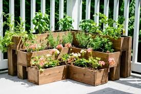 you can create a medicinal herb garden on your patio and it d be not