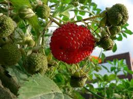 Fruit Trees  Alan Gardens  Service Provider In Kottayam  ID Kerala Fruit Trees