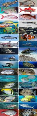 100 Nama Ikan Laut