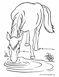 A Farm Horse Drinking Water In The Lake Coloring Page Active Faith