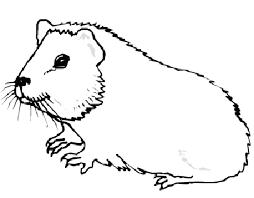 Kleurplaten Dieren Hamster
