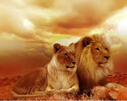 african animals wallpaper high resolution. Simple Resolution 1280x1024 With African Animals Wallpaper High Resolution T