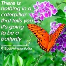 Butterfly Quotes Enchanting 48 Best Butterflies Cocoons Images On Pinterest Butterflies