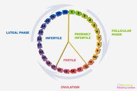 Ovulation Chart Pin On Womens World