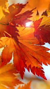 Leaves Fall Wallpaper Android, Cool ...