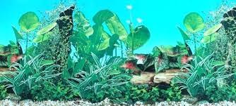 Fish Tank Background Screengrab Me