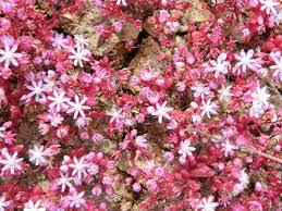 Image result for wild succulent