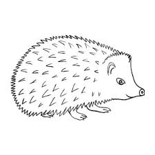 Small Picture H is for Hedgehog Coloring Pages Bulk Color