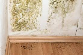 bathroom mold removal products. Ideas Bathroom Mold Removal Or We Provide Commercial And Residential Remediation Products O