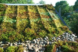 a green roof at the north ina arboretum demonstrates mosses are a viable alternative to sedums