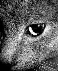 cropping photography. Plain Cropping Cropped Cat  Created By Meatman Inside Cropping Photography D