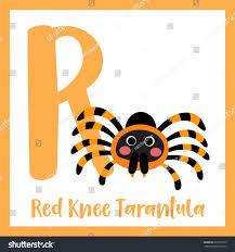 Cute Children Abc Animal Alphabet R Stock Vector 505779313