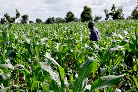 Image result for FACT ABOUT AGRICULTURE IN NIGERIA
