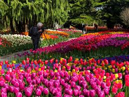 seattle tulip festival tours