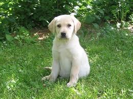 cute dogs and puppies. Perfect And Image Source Redjar Via Flickr In Cute Dogs And Puppies R