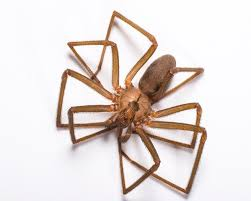 7 Spiders Commonly Found In Southwest Florida Catseye Pest